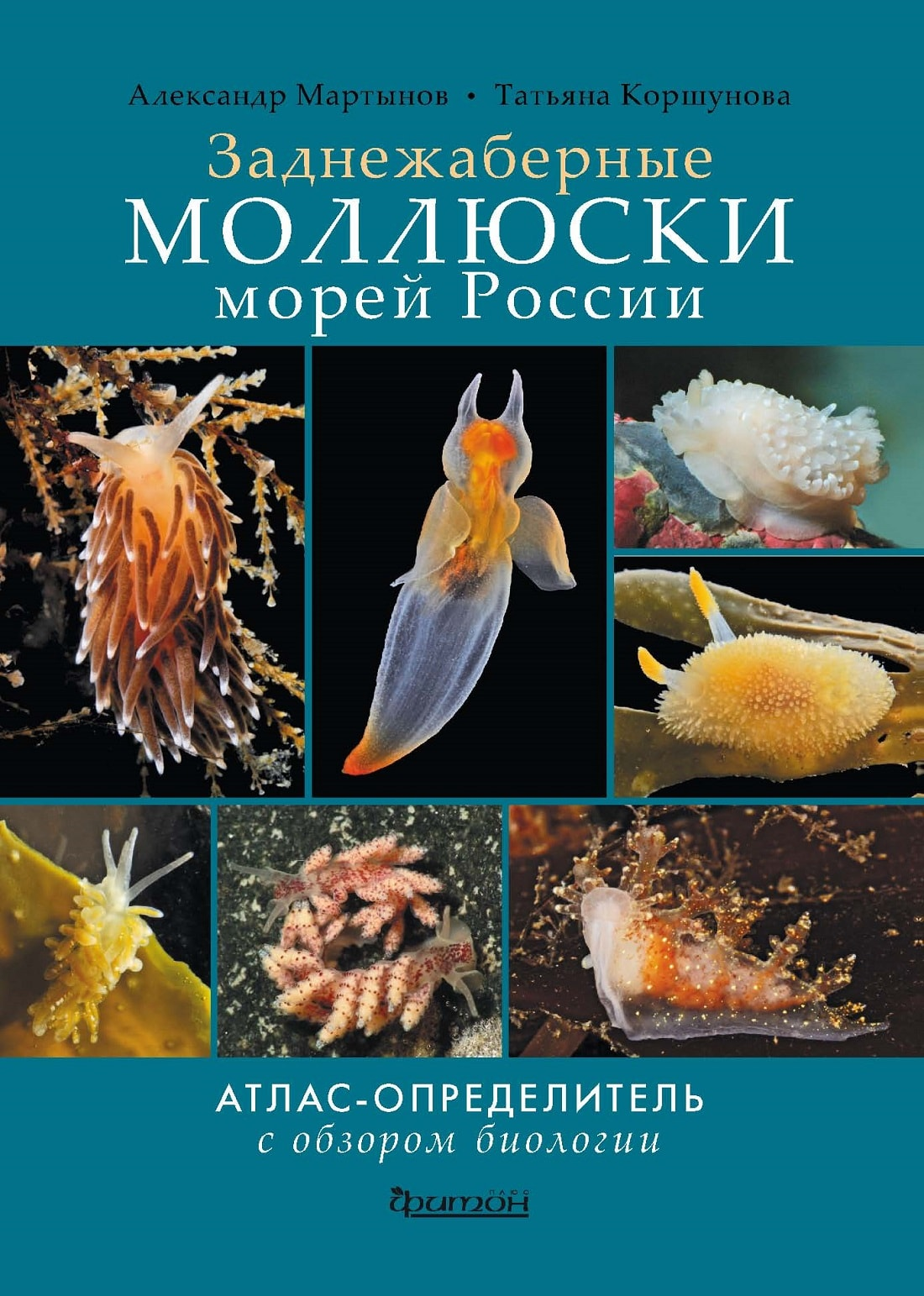 Моллюски-min