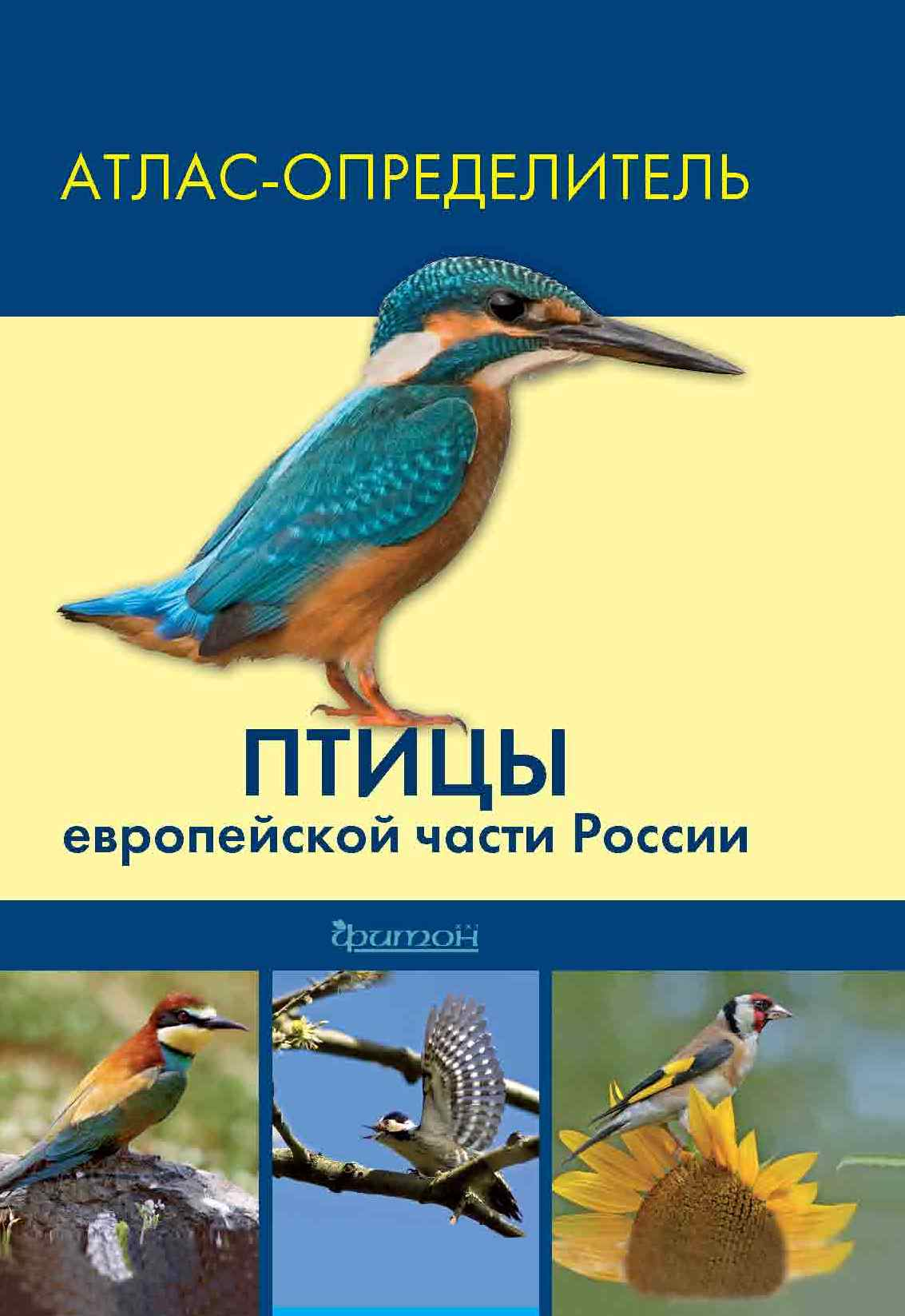 Птицы-min