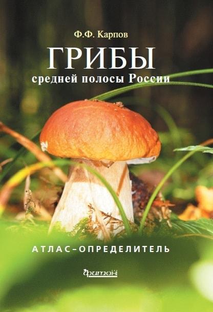 грибы-min