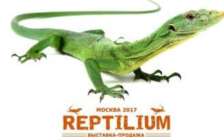 Выставка-продажа террариумных  животных «Рептилиум»