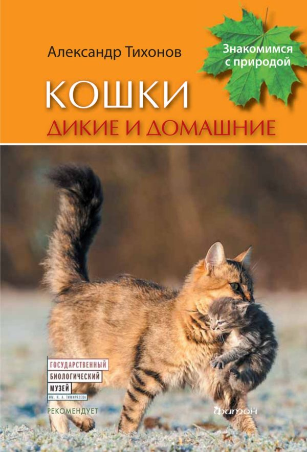 Кошки дикие и домашние-min