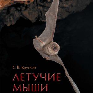 Летучие мыши: Происхождение, места обитания, тайны образа жизни